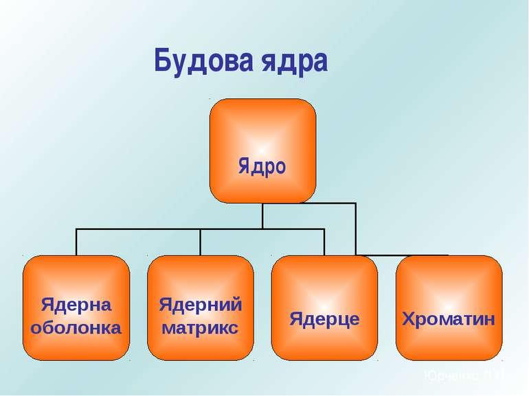 Будова ядра Юрченко Л.П.