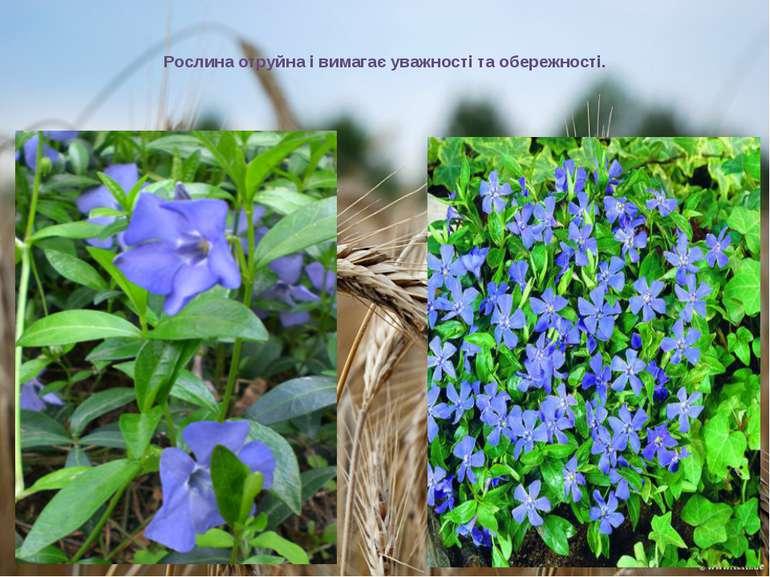 Рослина отруйна і вимагає уважності та обережності.