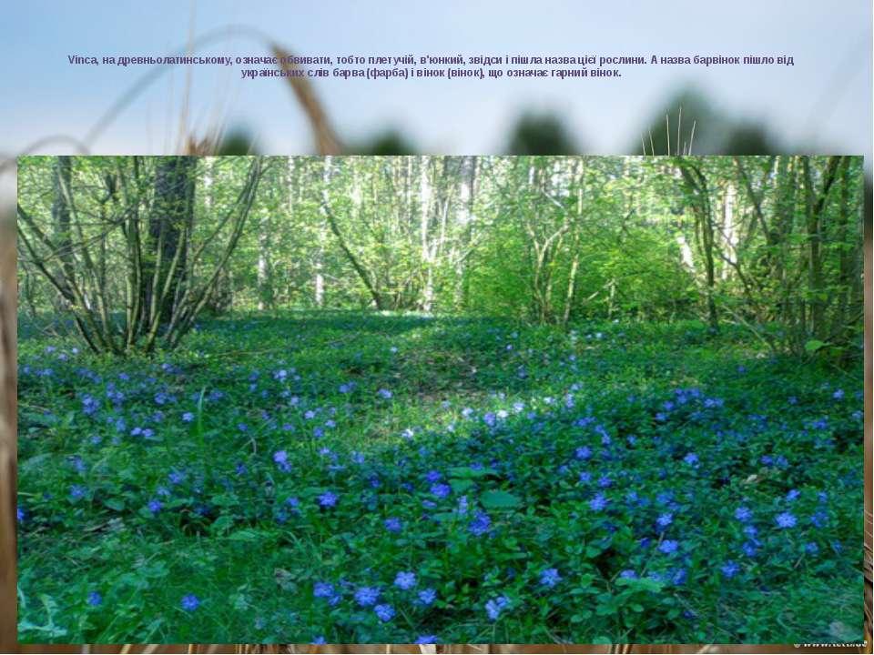 Vinca, на древньолатинському, означає обвивати, тобто плетучій, в'юнкий, звід...