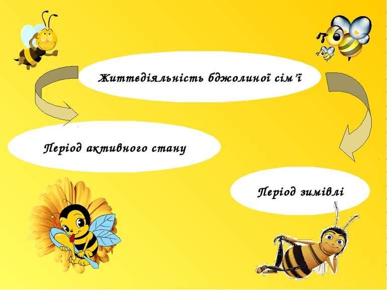 Життєдіяльність бджолиної сім'ї Період зимівлі Період активного стану м. Жтит...