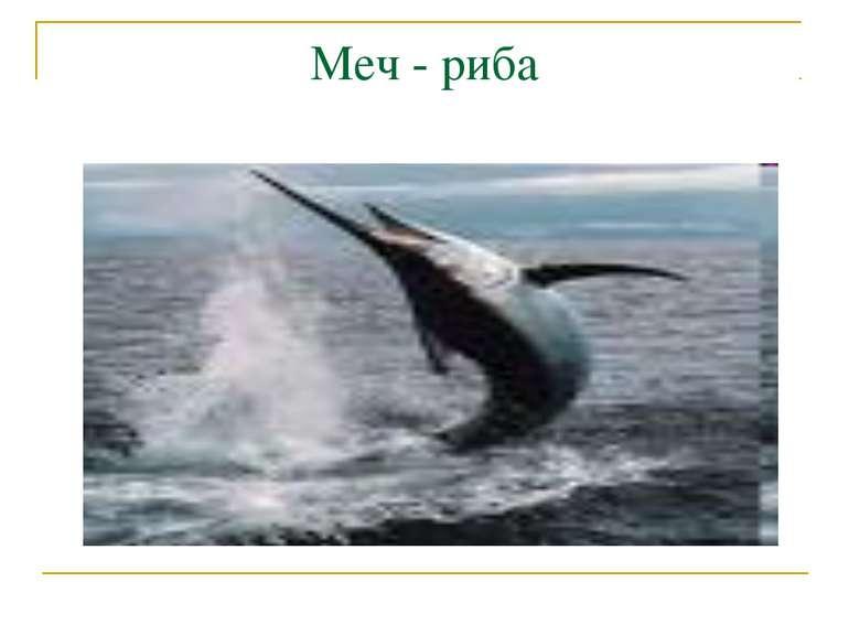 Меч - риба