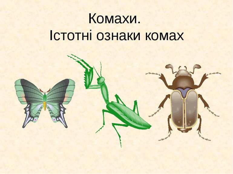 Комахи. Істотні ознаки комах