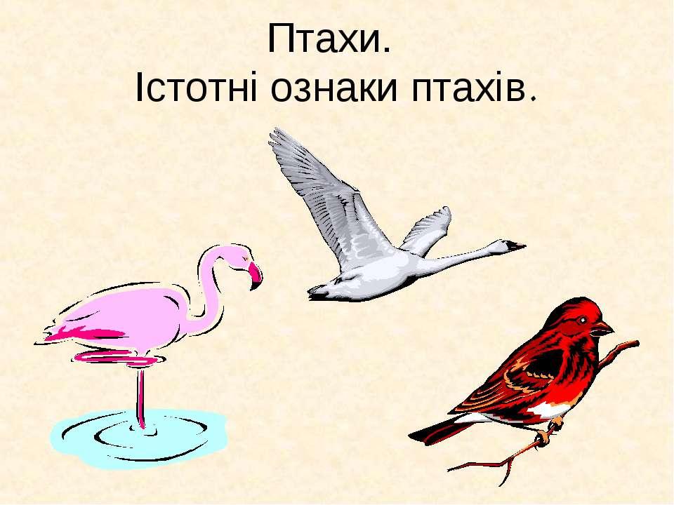 Птахи. Істотні ознаки птахів.