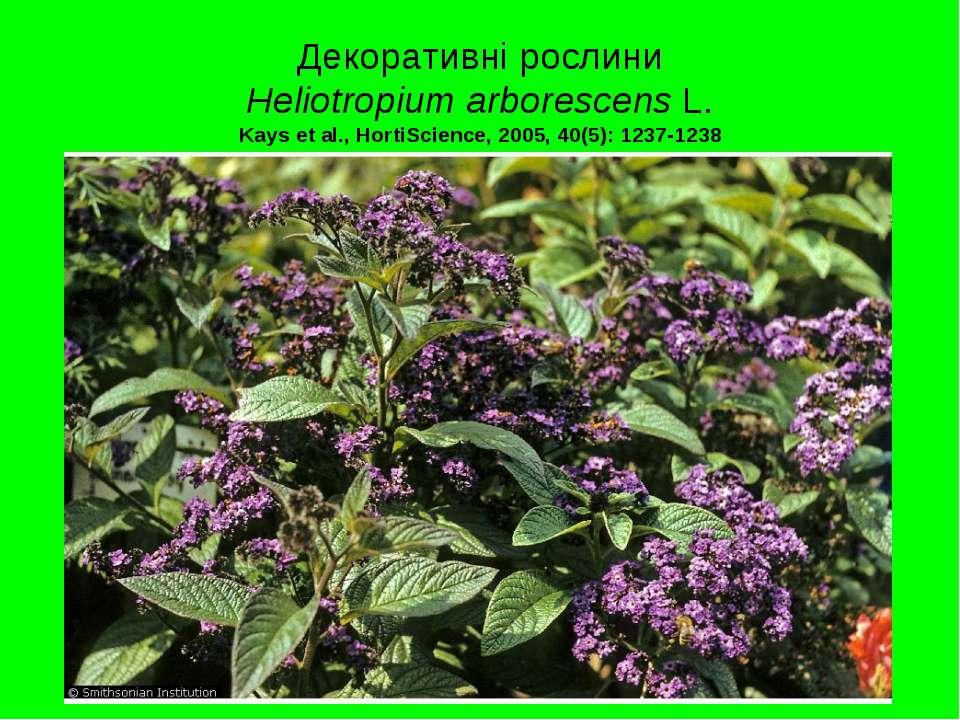 Декоративні рослини Heliotropium arborescens L. Kays et al., HortiScience, 20...