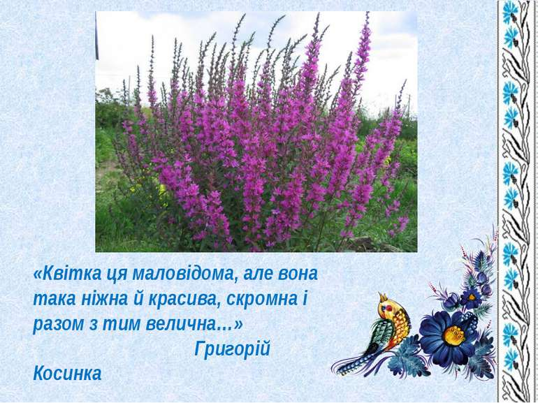 «Квітка ця маловідома, але вона така ніжна й красива, скромна і разом з тим в...