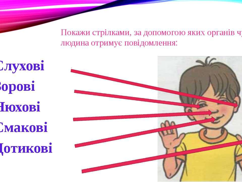 Покажи стрілками, за допомогою яких органів чуттів людина отримує повідомленн...