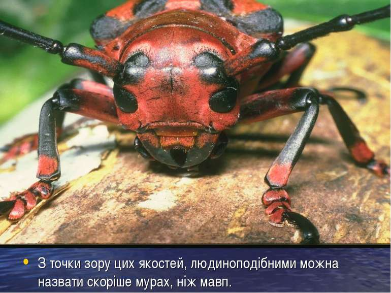 З точки зору цих якостей, людиноподібними можна назвати скоріше мурах, ніж мавп.