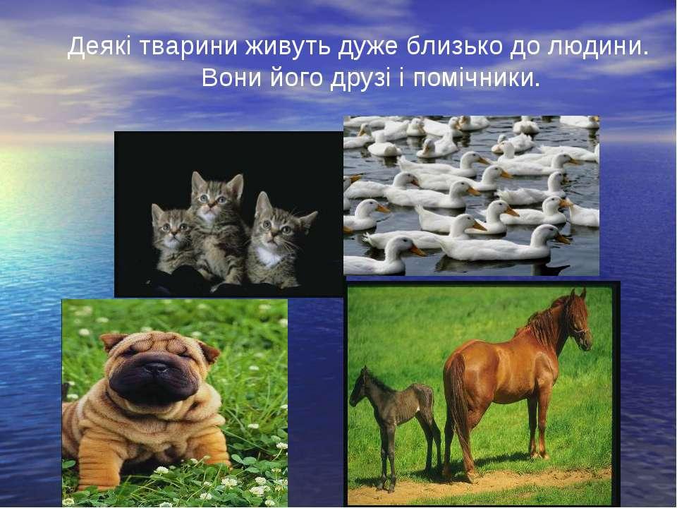 Деякі тварини живуть дуже близько до людини. Вони його друзі і помічники.