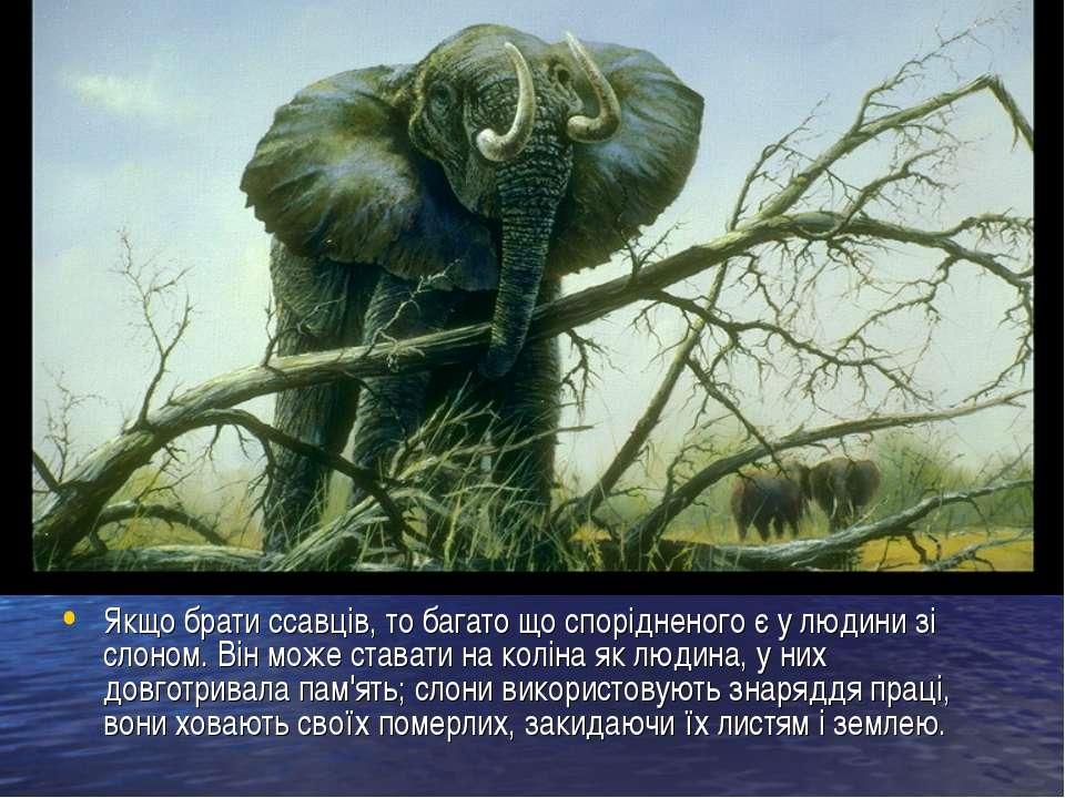 Якщо брати ссавців, то багато що спорідненого є у людини зі слоном. Він може ...