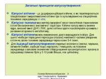 Загальні принципи калусоутворення: Калусні клітини – це дедиференційовані клі...