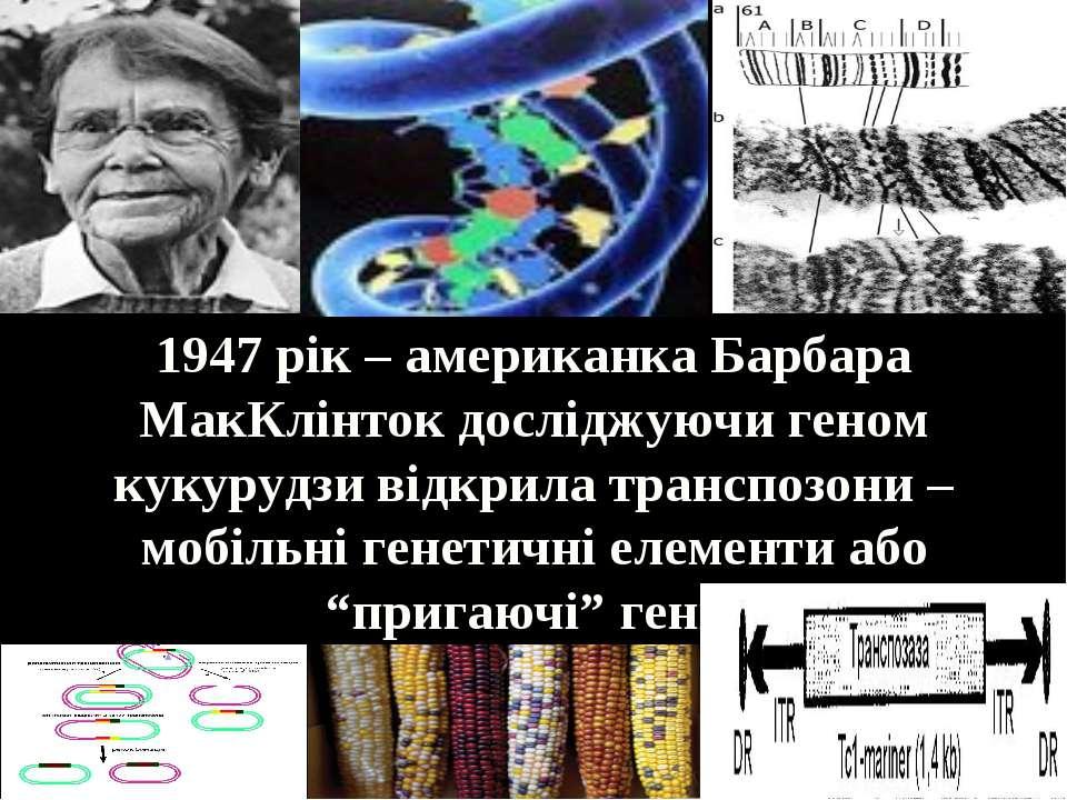 1947 рік – американка Барбара МакКлінток досліджуючи геном кукурудзи відкрила...