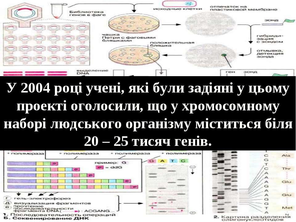 У 2004 році учені, які були задіяні у цьому проекті оголосили, що у хромосомн...