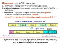 * Процесінг пре-мРНК включає: кепування – приєднання 7-метилгуанозину до 5'-к...