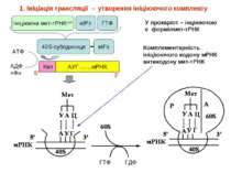 * 40S-субодиниця 1. Ініціація трансляції → утворення ініціюючого комплексу Ін...
