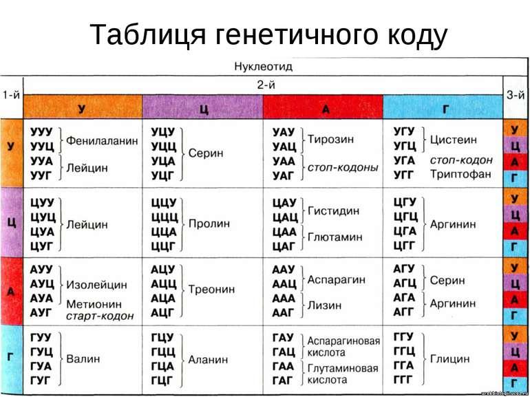 * Таблиця генетичного коду