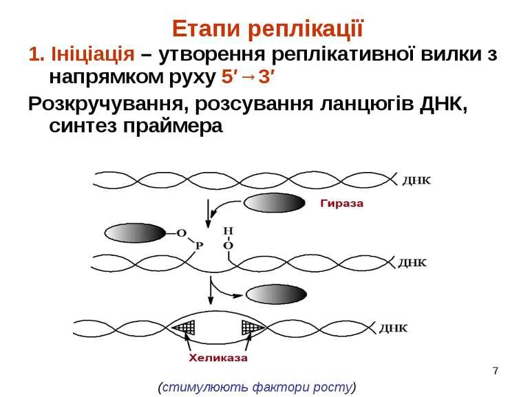 * Етапи реплікації 1. Ініціація – утворення реплікативної вилки з напрямком р...