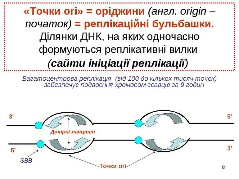 * «Точки ori» = оріджини (англ. оrigin – початок) = реплікаційні бульбашки. Д...