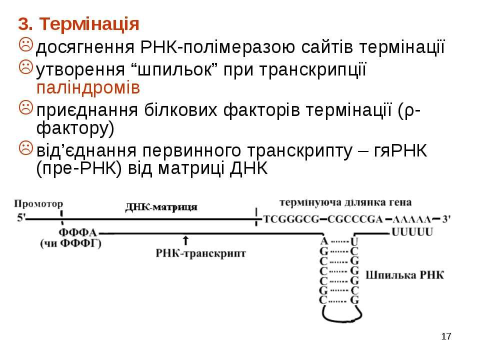 """* 3. Термінація досягнення РНК-полімеразою сайтів термінації утворення """"шпиль..."""