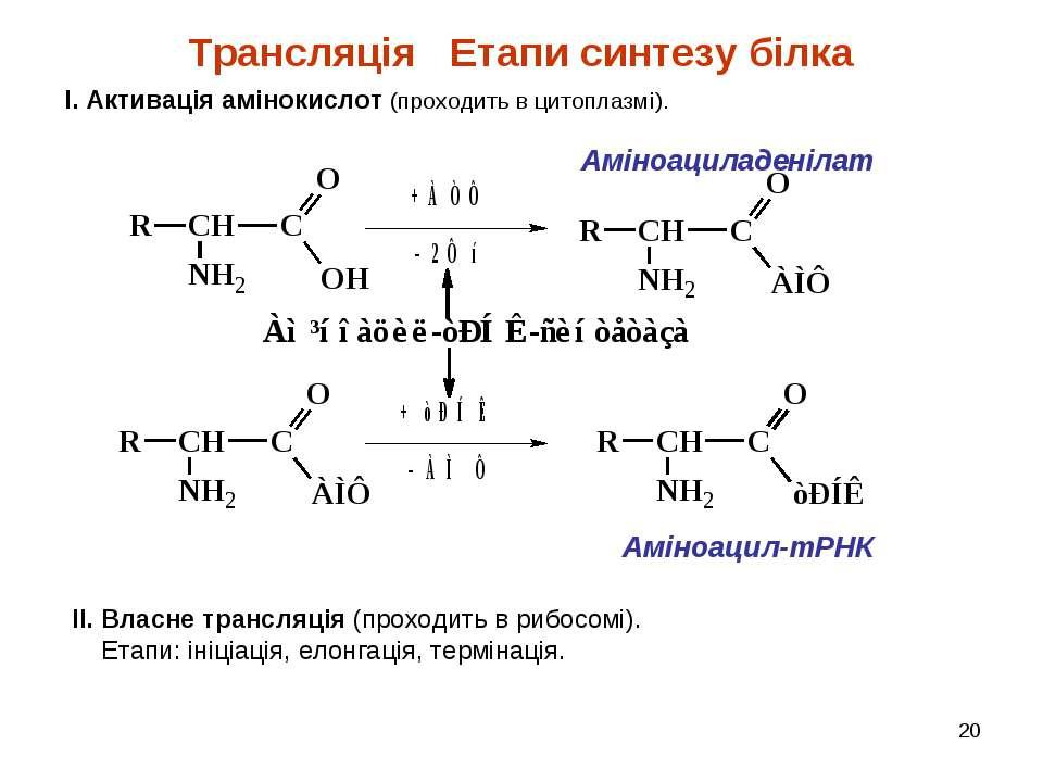 * Трансляція Етапи синтезу білка І. Активація амінокислот (проходить в цитопл...