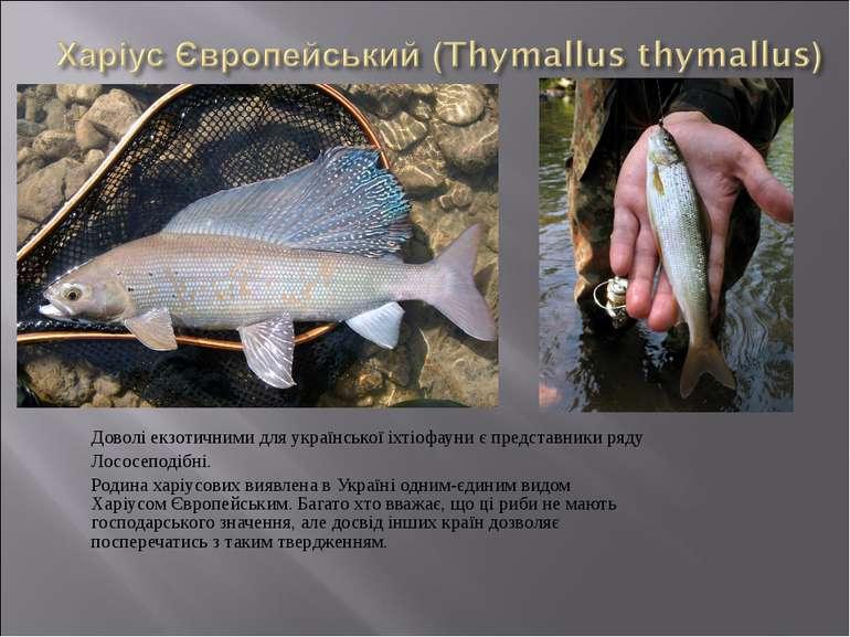 Доволі екзотичними для української іхтіофауни є представники ряду Лососеподіб...