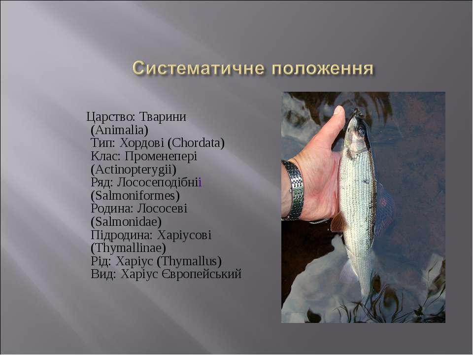 Царство: Тварини (Animalia) Тип: Хордові (Chordata) Клас: Променепері (Actino...