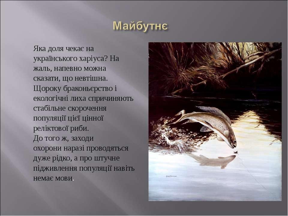 Яка доля чекає на українського харіуса? На жаль, напевно можна сказати, що не...