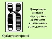 Субметацентричні Центромера зміщена від середини хромосоми і плечі мають різн...