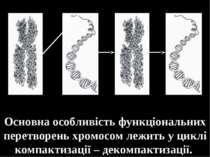 Основна особливість функціональних перетворень хромосом лежить у циклі компак...