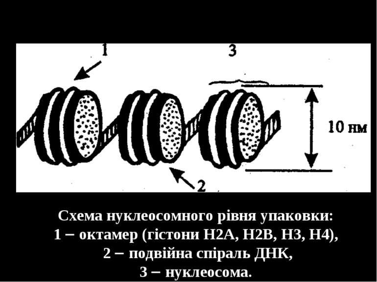 Схема нуклеосомного рівня упаковки: 1 октамер (гістони Н2A, Н2B, Н3, Н4), 2 п...