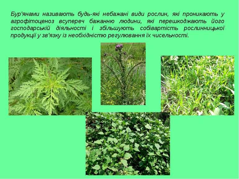 Бур'янами називають будь-які небажані види рослин, які проникають у агрофітоц...