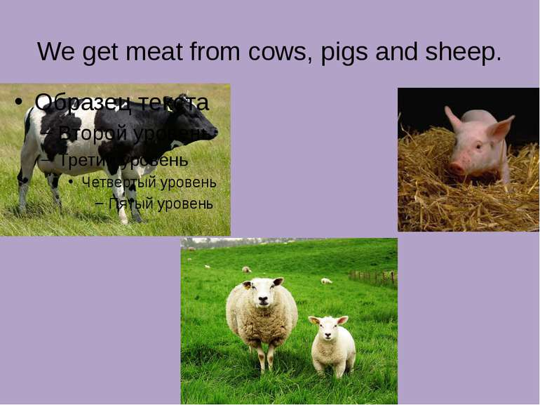 We get meat from cows, pigs and sheep.