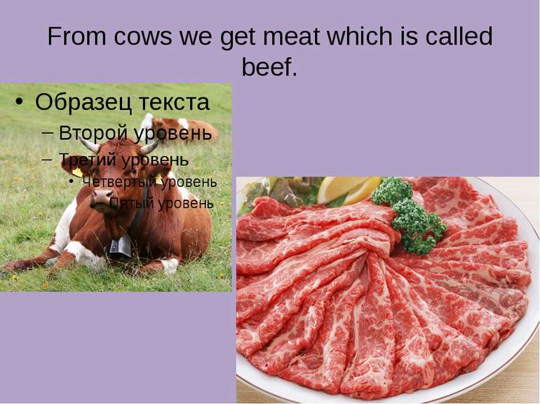 From cows we get meat which is called beef.