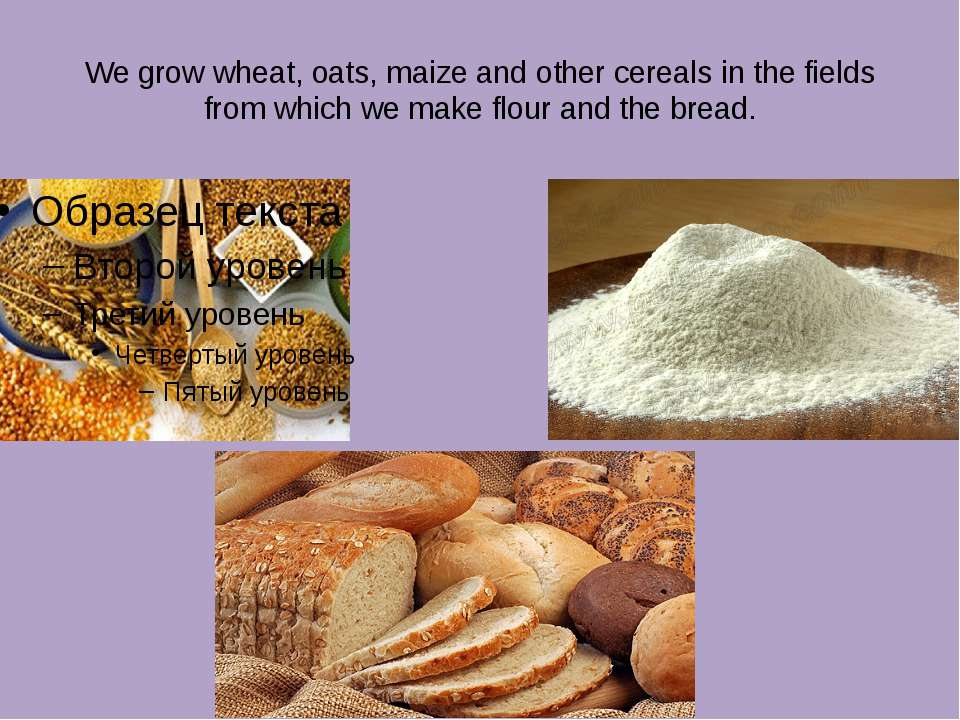 We grow wheat, oats, maize and other cereals in the fields from which we make...