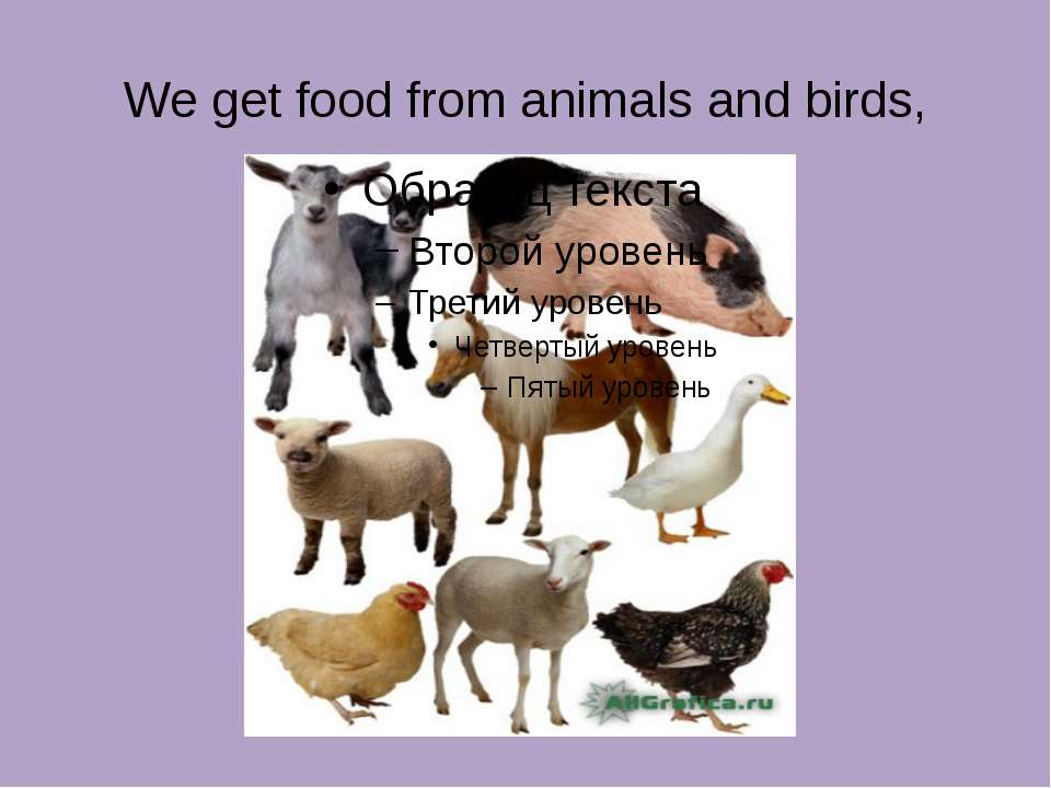 We get food from animals and birds,