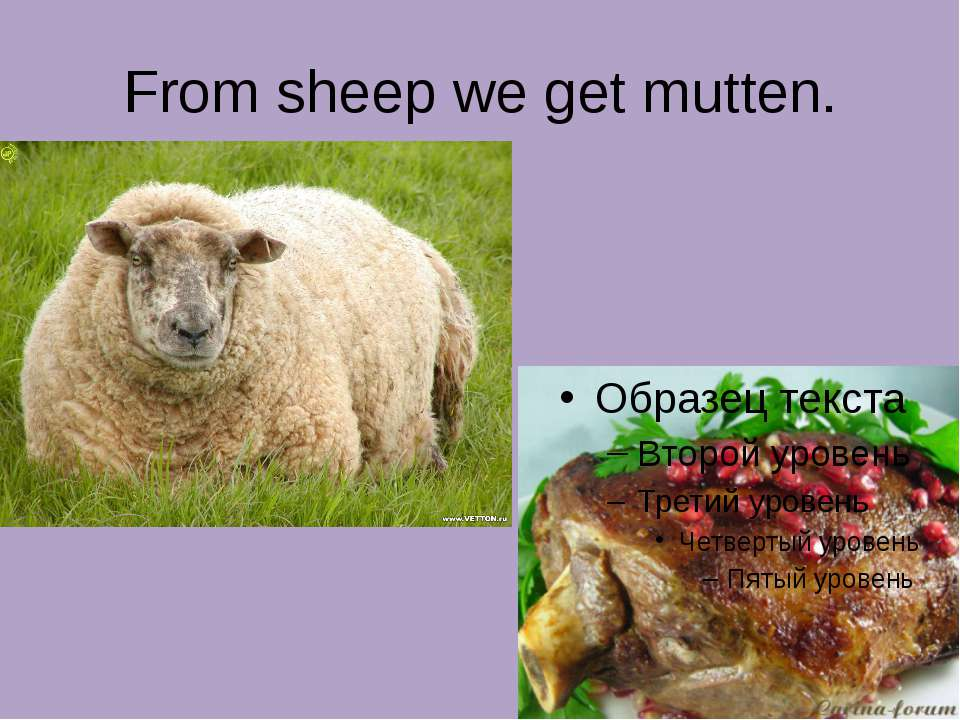 From sheep we get mutten.