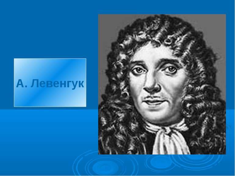 А. Левенгук