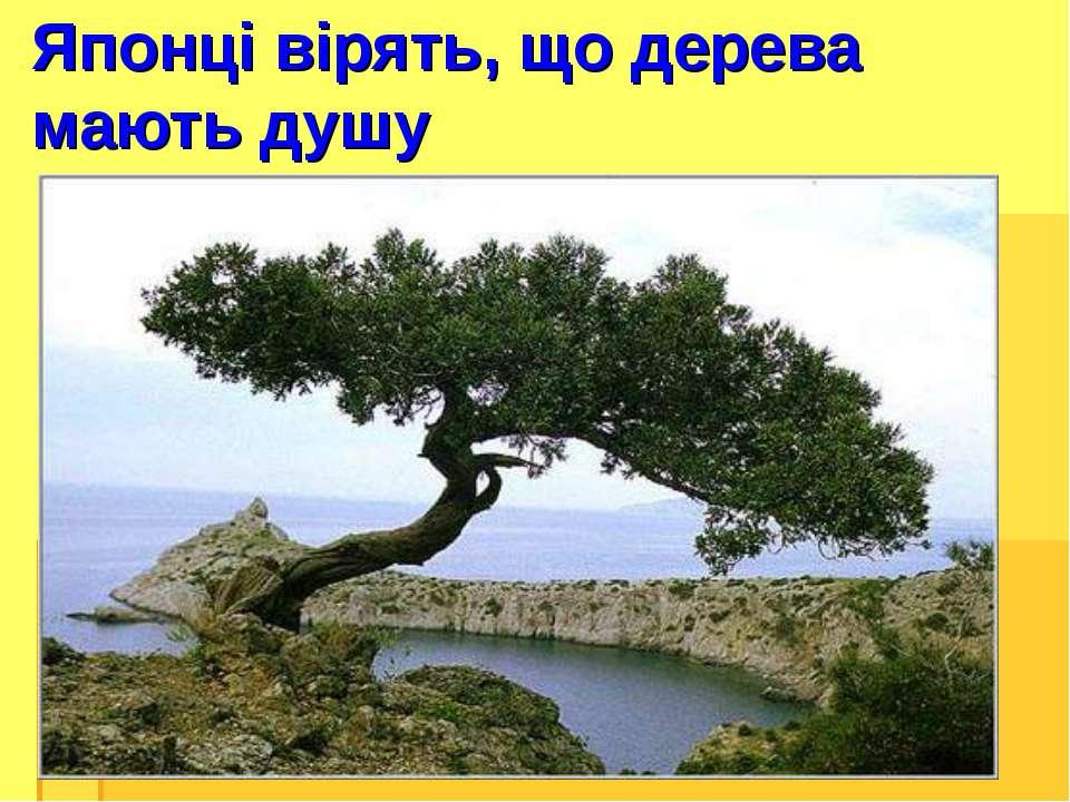 Японці вірять, що дерева мають душу
