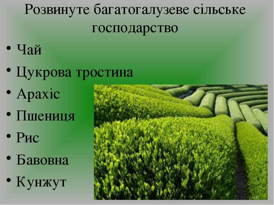 Розвинуте багатогалузеве сільське господарство Чай Цукрова тростина Арахіс Пш...