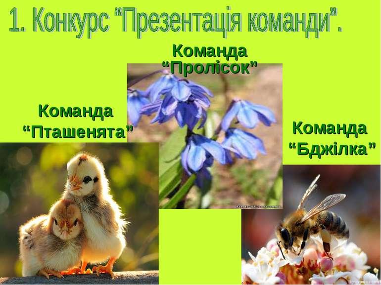 "Команда ""Бджілка"" Команда ""Пролісок"" Команда ""Пташенята"""
