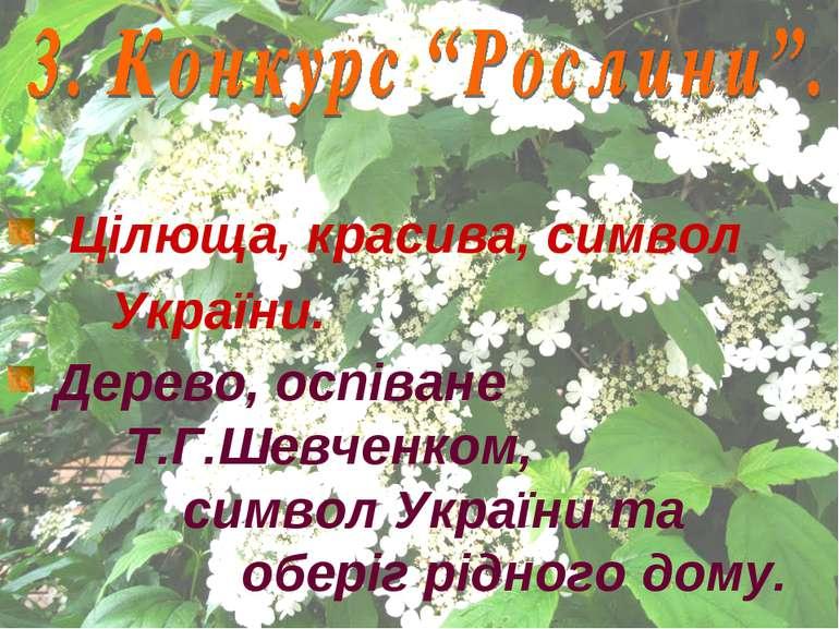 Цілюща, красива, символ України. Дерево, оспіване Т.Г.Шевченком, символ Украї...