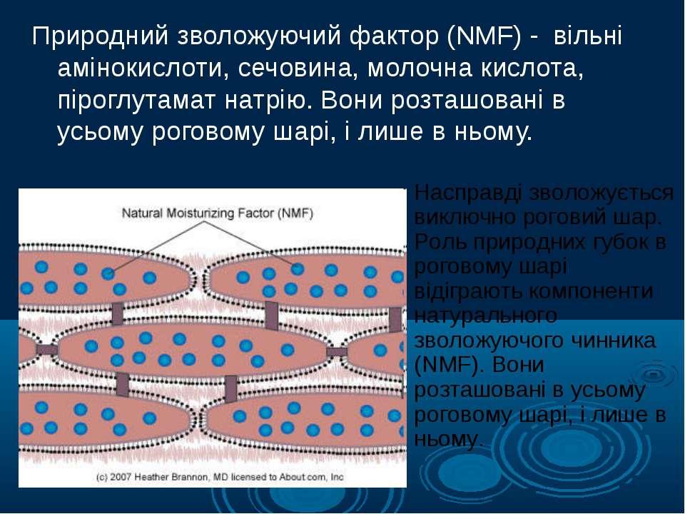 Природний зволожуючий фактор (NMF) - вільні амінокислоти, сечовина, молочна к...