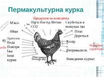Пермакультурна курка Колір Витривалість Виведення курчат Скубеться в пошуках ...