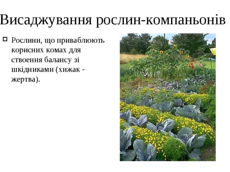 Висаджування рослин-компаньонів Рослини, що приваблюють корисних комах для ст...