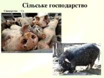 Сільське господарство Свинарство – Сх.
