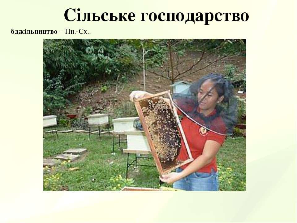 Сільське господарство бджільництво – Пн.-Сх..