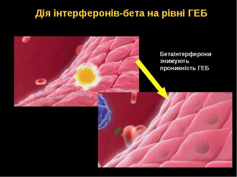 Бетаінтерферони знижують проникність ГЕБ Дія інтерферонів-бета на рівні ГЕБ