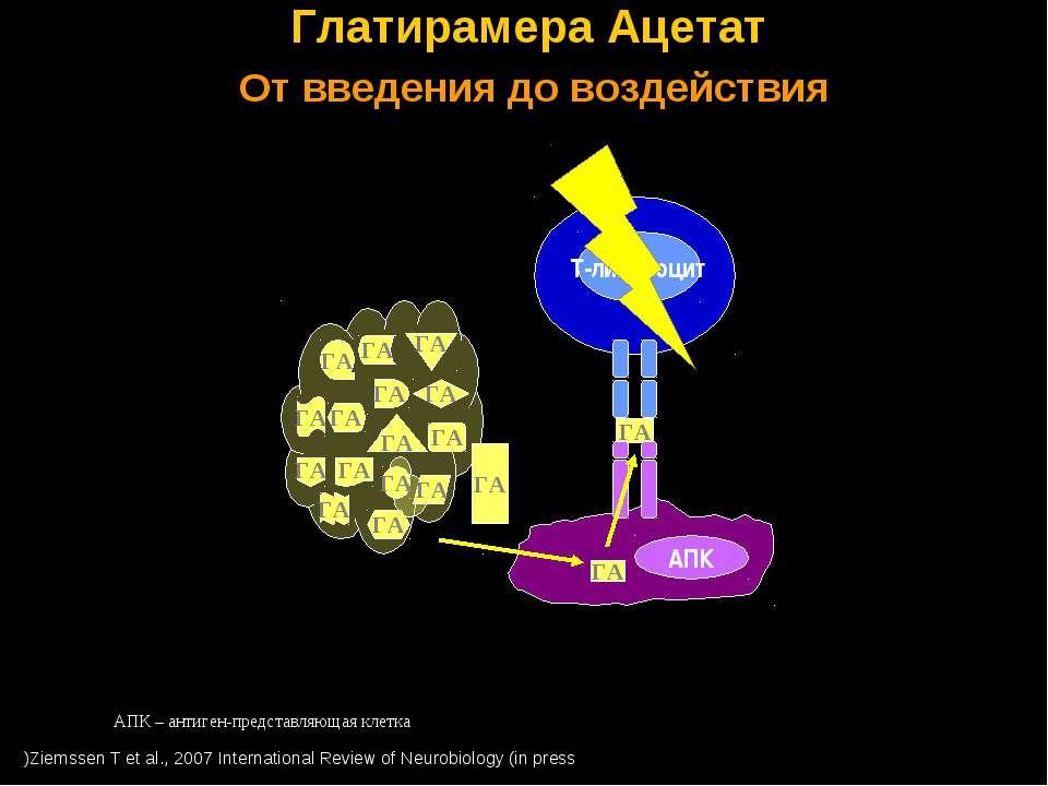 ГА ГА Глатирамера Ацетат От введения до воздействия Ziemssen T et al., 2007 I...