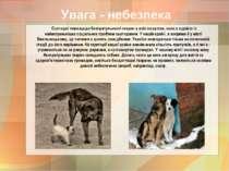Сьогодні тема щодо безпритульності тварин у всіх на вустах, вона є однією із ...