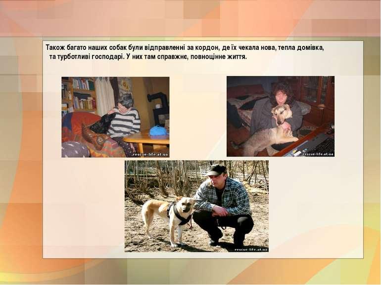 Також багато наших собак були відправленні за кордон, де їх чекала нова, тепл...