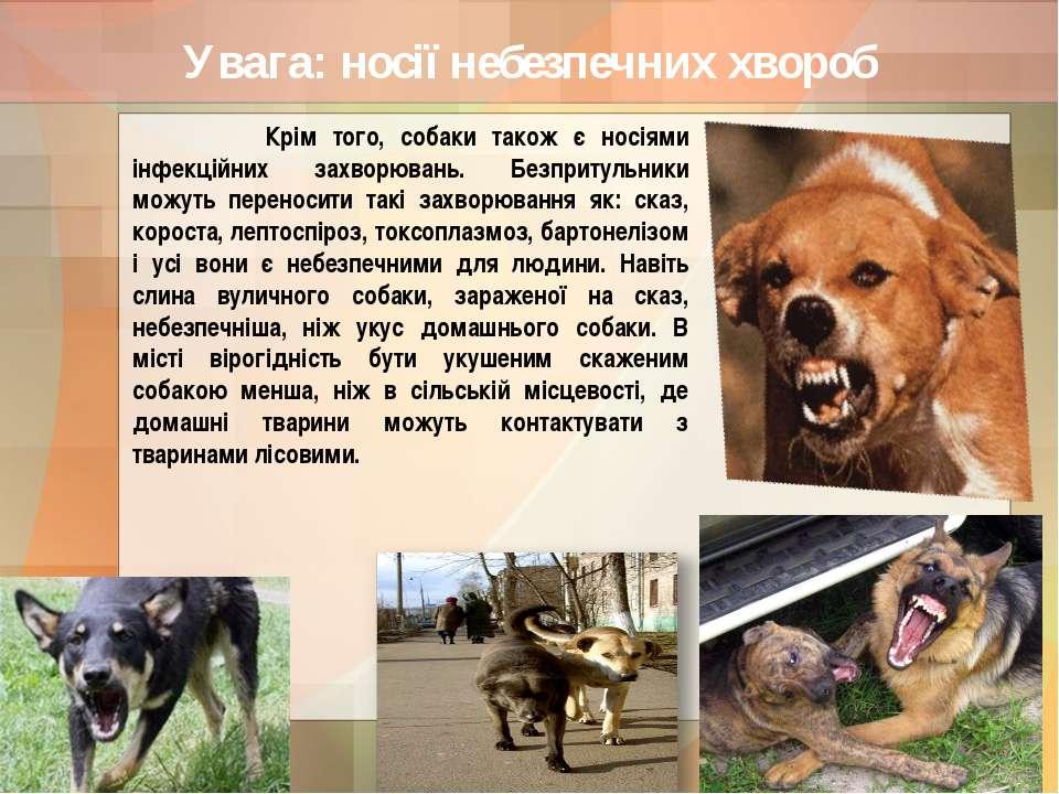 Увага: носії небезпечних хвороб Крім того, собаки також є носіями інфекційних...
